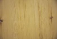 Stone pine / Arolla pine